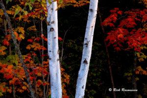 Trees - Rick Rasmussen